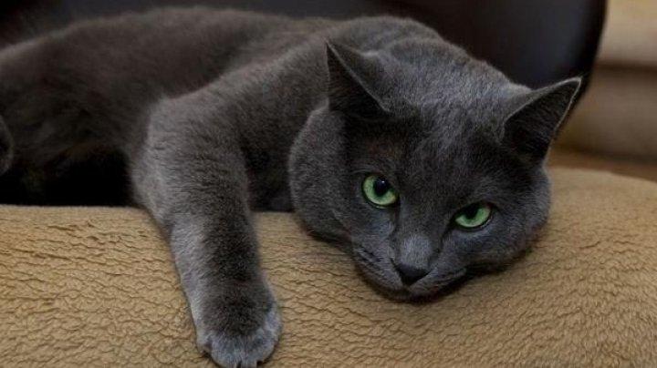 Кот провел ночь с кошками в отеле для животных: после этого ему потребовалась капельница (ФОТО)