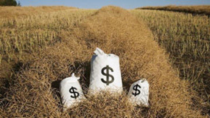Агентство AIPA с начала года выплатило фермерам 428 млн. леев в качестве субсидий