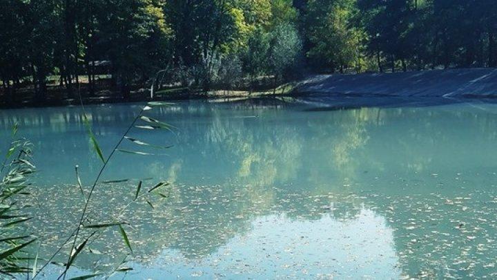 Экологическая катастрофа: в одном из столичных озер всплыла рыба (ФОТО)
