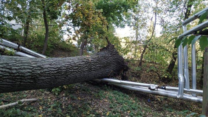 На Телецентре огромное дерево рухнуло на припаркованные автомобили (ФОТО)