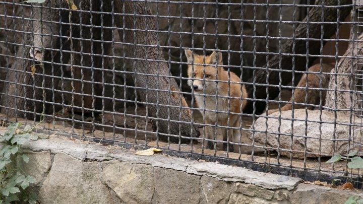 Кишинёвский зоопарк и его обитатели готовятся к зиме