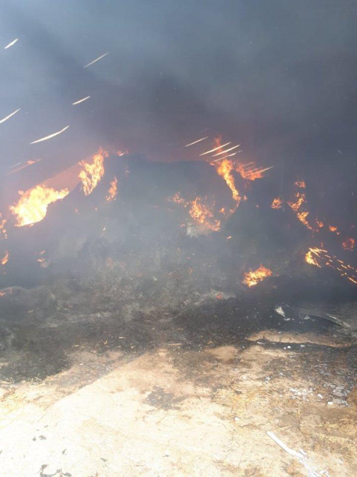 Более 70 коров погибли при пожаре на ферме в Оргеевском районе (ФОТО)