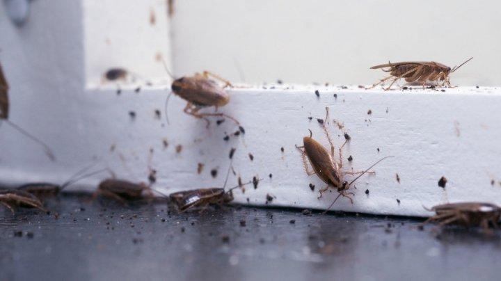 В Петербурге жильцы дома решили провести крестный ход против тараканов