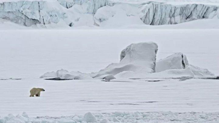 В Арктике наиболее опасны для туристов моржи, медведи и айсберги