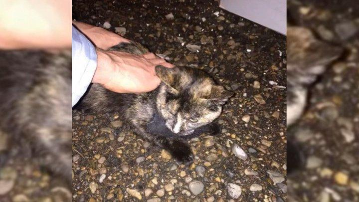 В Татарстане с погоней задержали кошку-наркокурьера