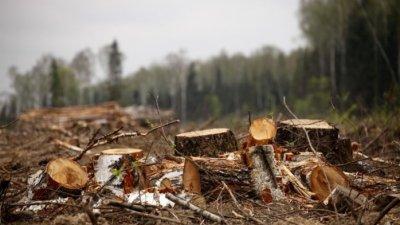 Открыто уголовное дело  по факту незаконной вырубки леса в Днестровском парке
