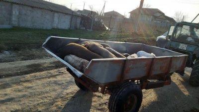 Массовый забой животных в одном из сел Хынчештского района (ВИДЕО)