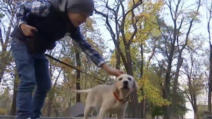 Мальчик собрал в Сети миллион лайков ради собаки