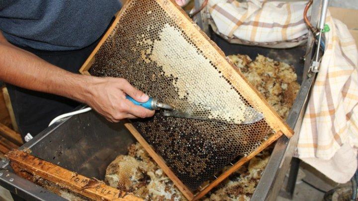 Жители Молдовы о работе правительства Санду: Чем они занимались, может собирали мед в ульи?!