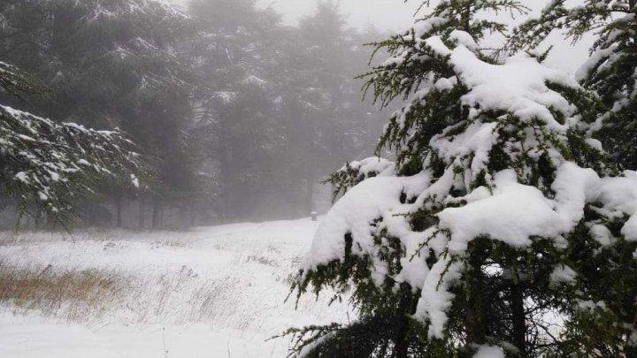 Северо-запад Африки завалило снегом (ФОТО)