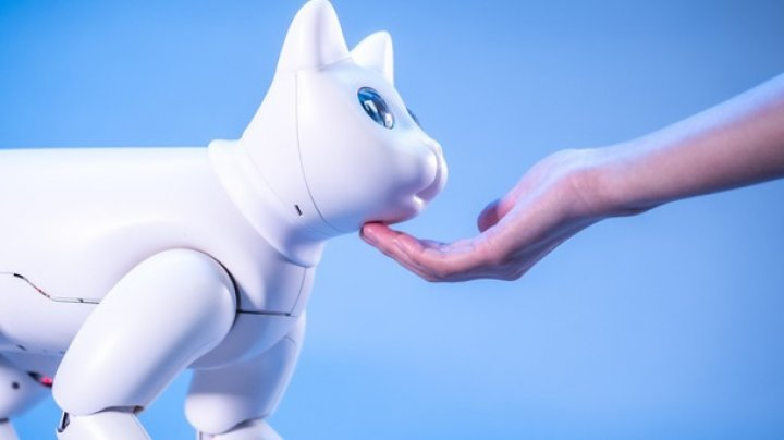 """Китайцы изобрели робота-кошку с эмоциями и """"характером"""" (ВИДЕО)"""