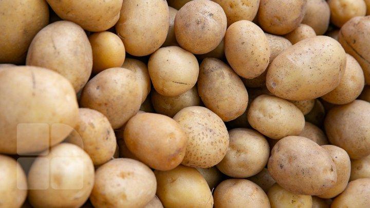 Товар с гнилью: 95% ввозимого в Молдову картофеля заражены бактериями