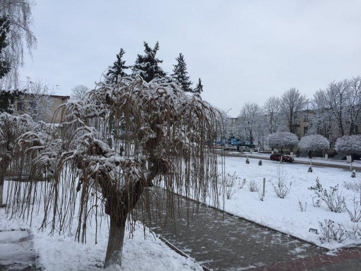 Зимняя сказка в Фалештах: город накрыло белым одеялом (ФОТО)