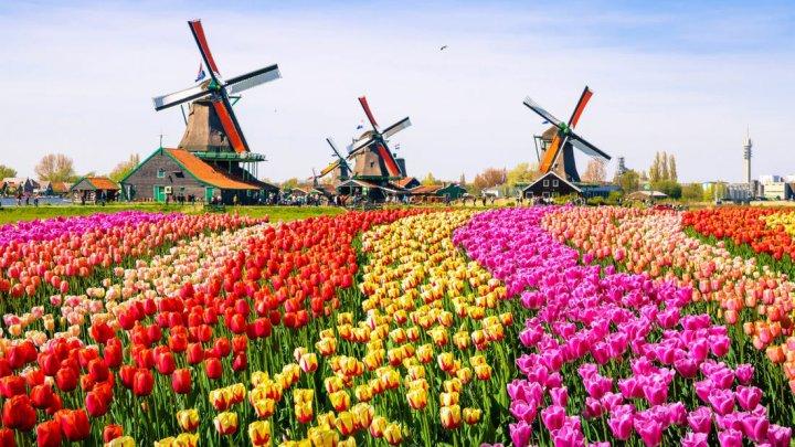 """""""Это фантастика"""": в Амстердаме открыли очередной сезон тюльпанов"""