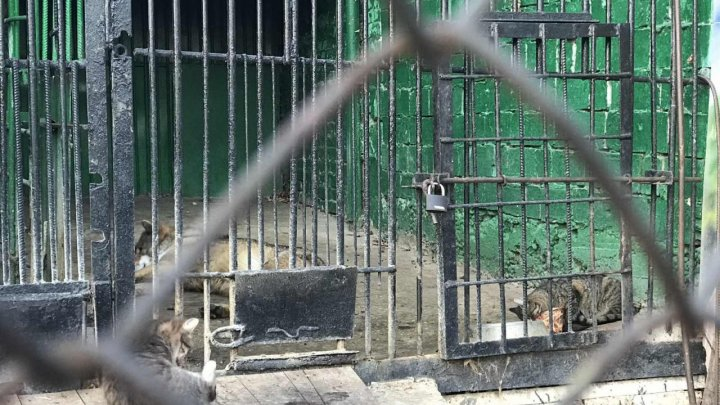 """Смелости ей не занимать. Бесстрашная кошка """"обокрала"""" волка из столичного зоопарка (ВИДЕО)"""