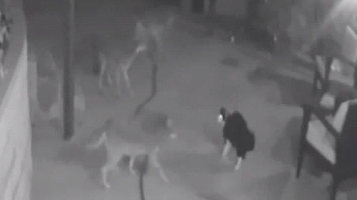 Храбрый Макс: в США домашний кот прогнал со двора трех койотов