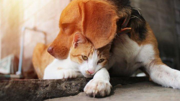 ВОЗ заявила о случаях заражений домашних животных коронавирусом от людей