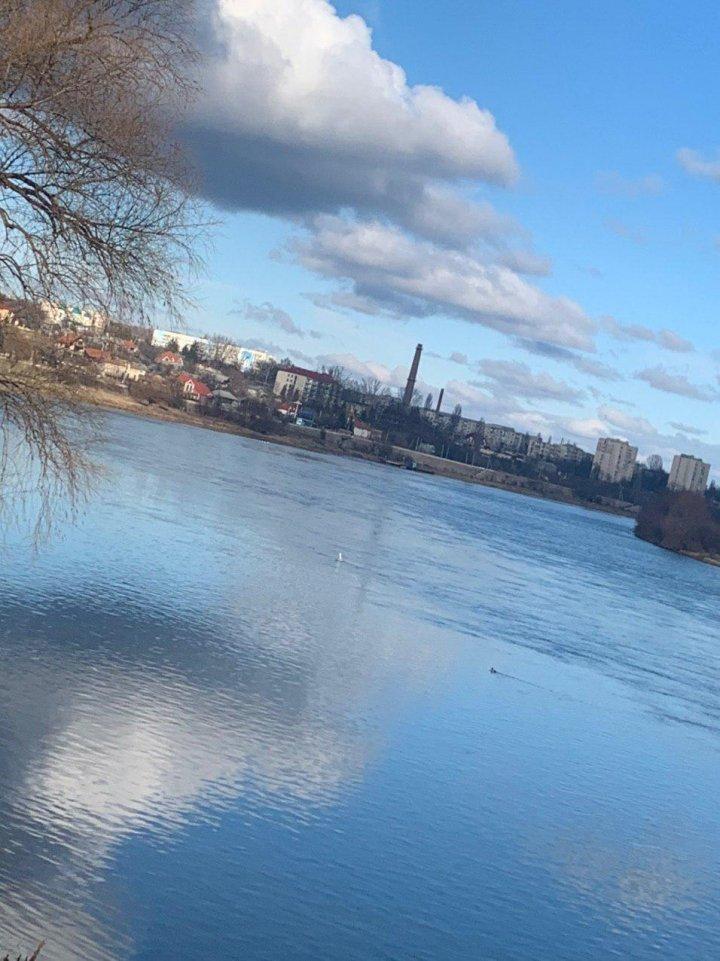 Десятки лебедей и диких уток остались зимовать на Днестре (ВИДЕО)