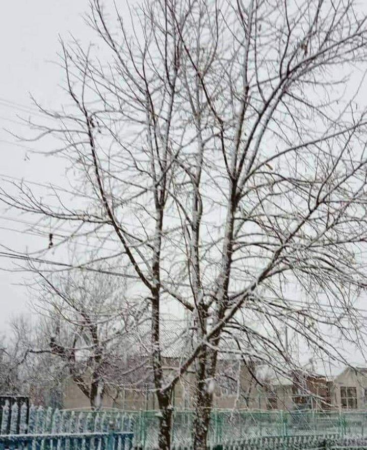 На севере Молдовы выпал снег: Бричаны накрыло белым покрывалом (ФОТО)
