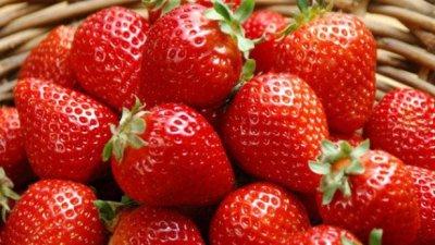Привлекательный бизнес: в выращивание ягод в Молдове вкладывают серьезные инвестиции