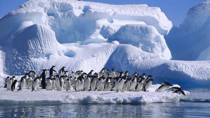 Курс на Южный полюс: девять граждан Молдовы и Румынии прибыли в Антарктиду