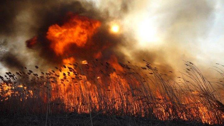 Пожар на озере Гидигич: огонь охватил площадь в 600 квадратных метров