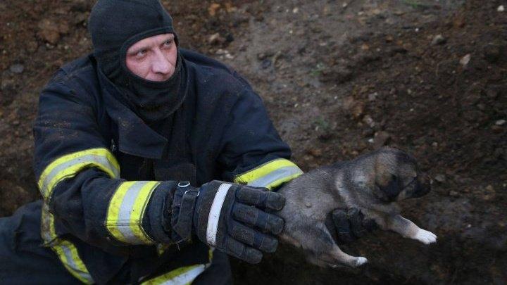 Семерых щенков достали живыми и невредимыми из-под земли в столице (ВИДЕО)