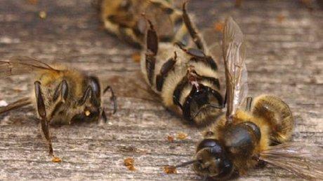 Молдавские пчеловоды подсчитывают потери после зимовки