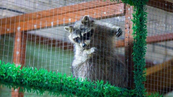 Владельцы контактного зоопарка во Владивостоке бросили зверей без еды