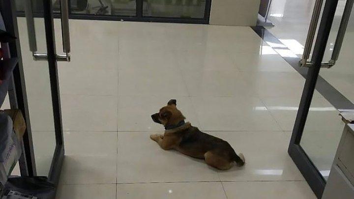 Уханьский Хатико: пес три месяца ждал хозяина в коридоре больницы, куда его привезла скорая перед смертью