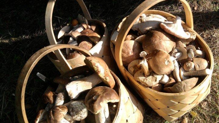 В Молдове начался грибной сезон: как не отравиться дарами леса