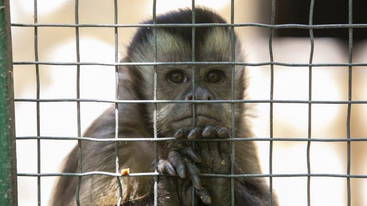 В Германии пенсионер купил сразу 33 333 билета в мюнстерский зоопарк