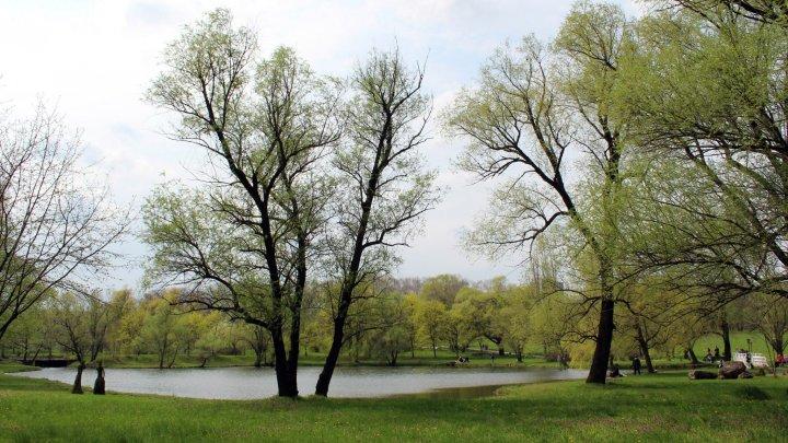 Без домашних животных и велосипедов: в кишиневском Ботаническом саду ужесточили правила поведения (ДОКУМЕНТ)