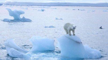 Ученые: средняя температура в центральной Арктике может вырасти на 20 градусов