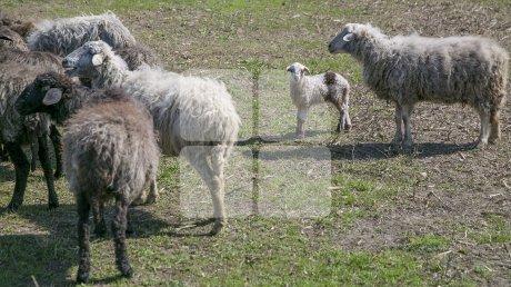 В Одесской области похищенного мужчину три года заставляли пасти овец