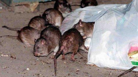 Объявили войну тараканам и крысам: в Кишиневе взялись за дезинсекцию и дератизацию подвалов многоэтажек