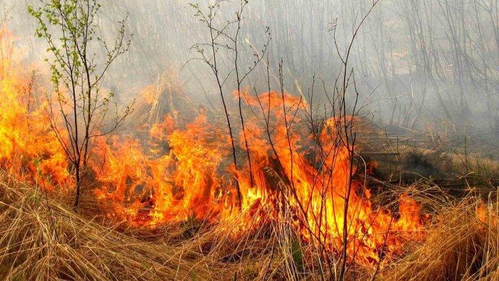 Лесные пожары угрожают двум пригородам Афин