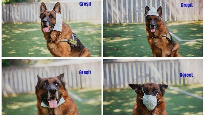 ФОТО ДНЯ: Даже собаки знают, как правильно носить маску