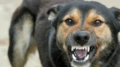 В столице бродячая собака напала на ребенка: пострадавшая в реанимации