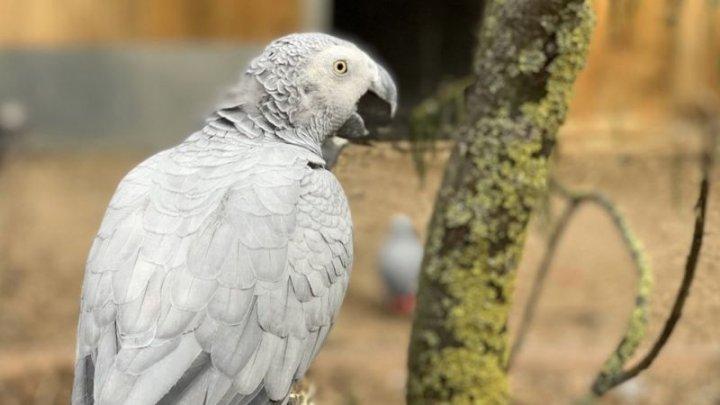 Пять попугаев научились нецензурным выражениям и обругали посетителей зоопарка