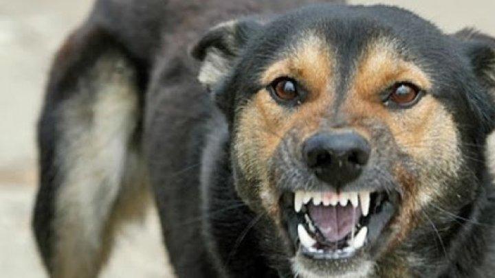 Собака без поводка напала на пятилетнюю девочку, когда та каталась на велосипеде