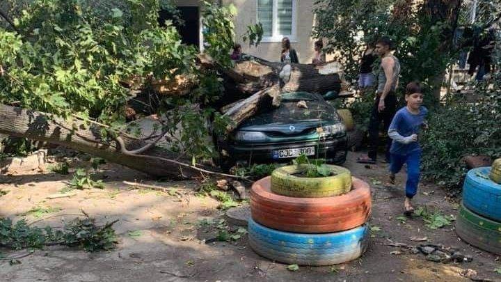 Желтый код в действии: в столице дерево упало на машину (ФОТО)