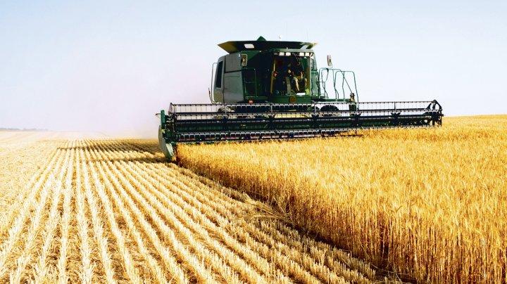 Правительство разрешило отпустить из госрезерва почти 21 тысячу тонн пшеницы