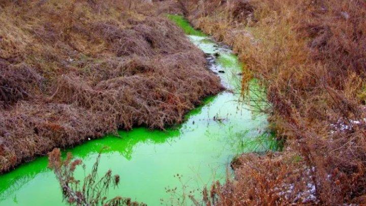 Река Грязная в России стала ярко-зеленого цвета (ВИДЕО)