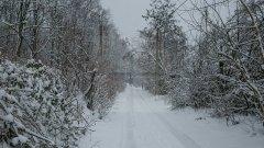 Снег, зима, лес, погода, Молдова