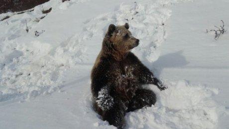 Покатался на лыжах: на румынском курорте турист пытался оторваться от медведя