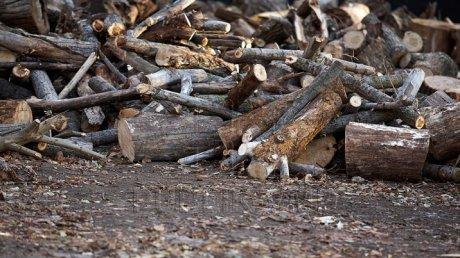 В заповеднике Plaiul Fagului лесничих застали при погрузке древесины среди ночи
