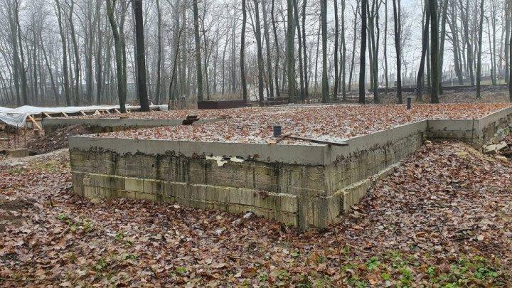 Бетон среди деревьев: контракт на аренду 40 гектаров леса в Дурлештах заморозили. Что дальше?