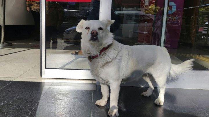 Трогательная встреча: собака прождала хозяина возле больницы до его выписки