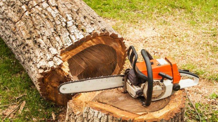 В Фалештском районе упавшее дерево убило 54-летнего мужчину
